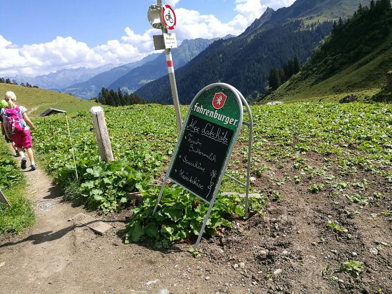 Angebot der Alpe Latschaetz