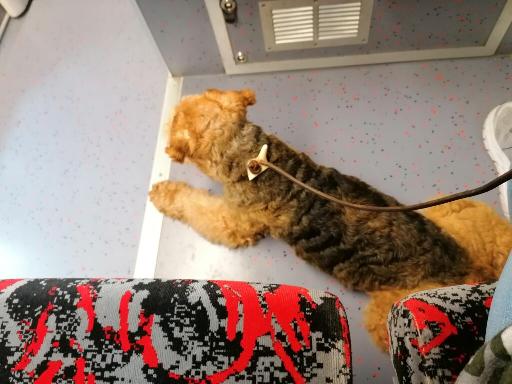 Theo macht sich im Zug breit Foto: © Susanne Böhling