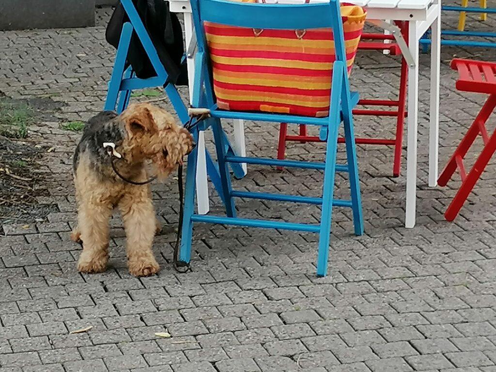 In der Fußgängerzone bleibt Theo cool © Susanne Böhling